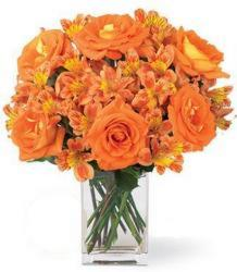 Flash Sale<br>Burst of Orange Roses<BR><B>Free Delivery!! from Flowers All Over.com