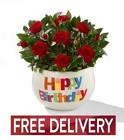 Happy Birthday Rose Plant<BR><B>FREE NEXT DAY DELIVERY</B>