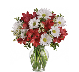 Daisies & Lilies<br><b>FREE DELIVERY from Flowers All Over.com