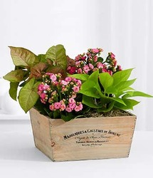 Pink Euro Garden<br><b>FREE SHIPPING! from Flowers All Over.com