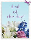 Today's Daily Deal<br><b>Save $20 or More!!