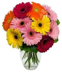 Gerbera Daisy Bouquet<BR><B>FREE NEXT DAY DELIVERY from Flowers All Over.com