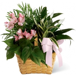 Medium Garden in Pinks<br><b>FREE DELIVERY from Flowers All Over.com