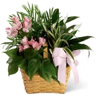 Medium Garden in Pinks<br><b>FREE DELIVERY