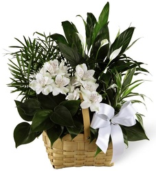 Medium Sympathy Garden<br><b>FREE DELIVERY from Flowers All Over.com