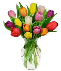 Mixed Spring Tulips<br><b>FREE DELIVERY from Flowers All Over.com