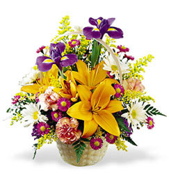 Natural Wonders Bouquet<br><b>FREE DELIVERY from Flowers All Over.com