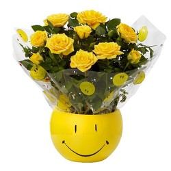 Smiley Face Rose Plant<br><b>FREE SHIPPING! from Flowers All Over.com