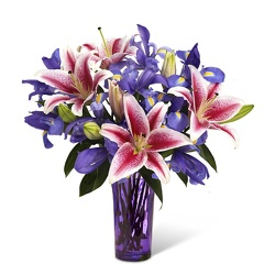 Shooting Star<br>FREE NEXT DAY DELIVERY from Flowers All Over.com