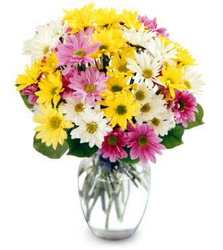 Mixed Spring Daisy Vase<br><b>FREE DELIVERY from Flowers All Over.com