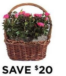 Rose Garden Basket<b> from Flowers All Over.com