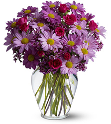 Delightfully Daisy<br><b>FREE DELIVERY from Flowers All Over.com