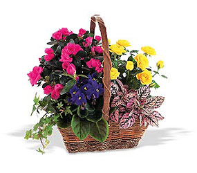 Nature's Garden Basket<b> from Flowers All Over.com
