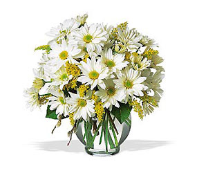 Delightful Daisies<b> from Flowers All Over.com
