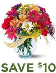 Bright & Bold<br><b>Same Day Delivery from Flowers All Over.com